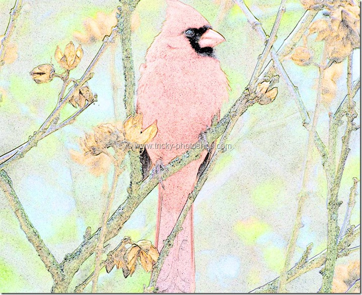 Turn an Image to Colored Pencil Sketch in Photoshop | TrickyPhotoshop
