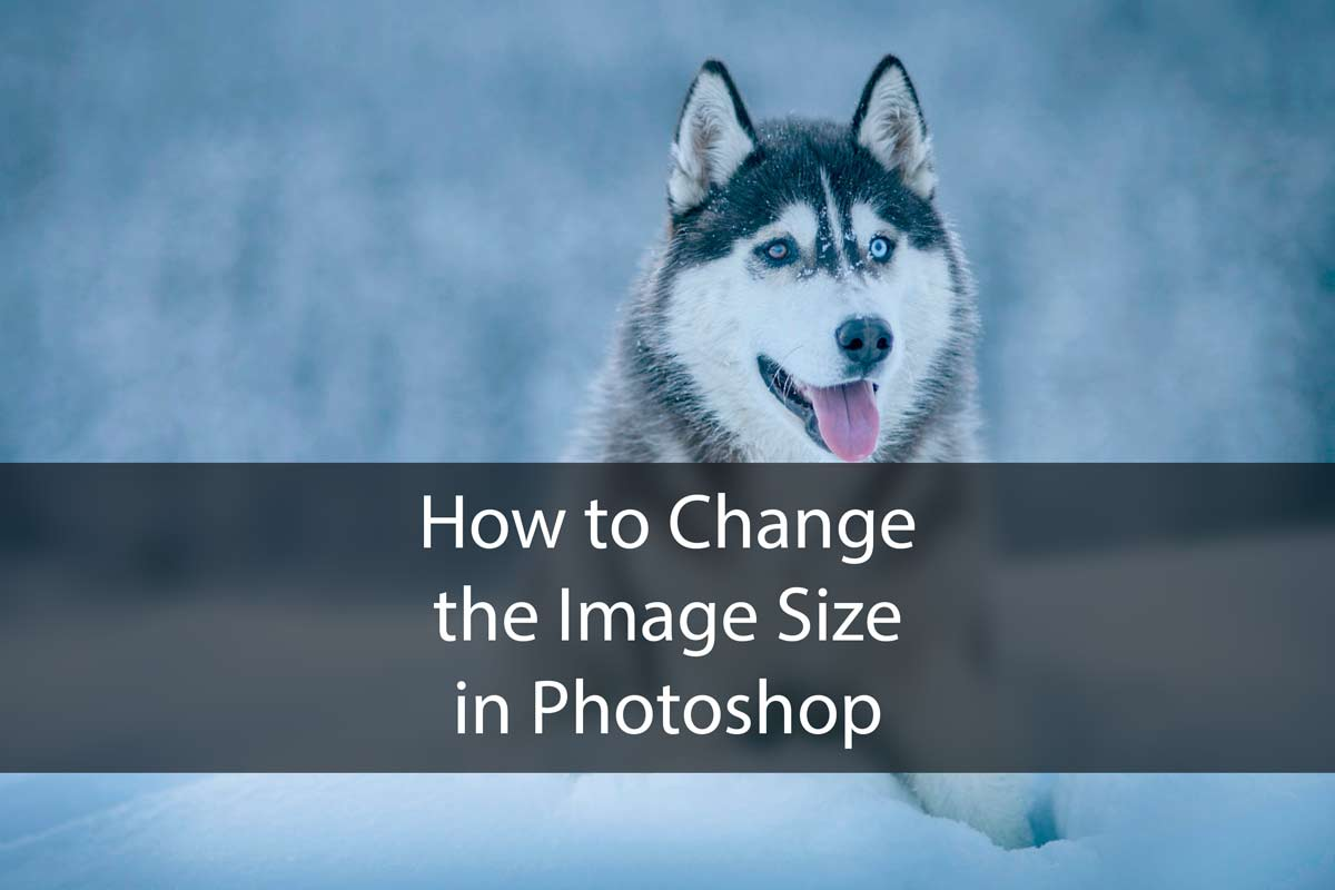 How to Adjust the Image Size in Photoshop?