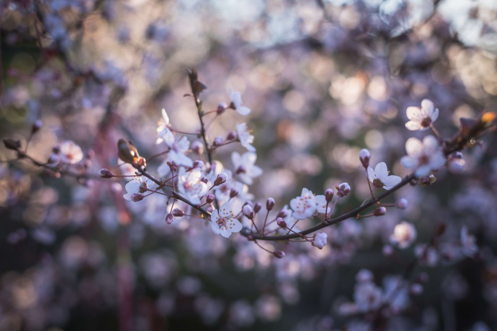 bloom-blooming-blossom-211451-1024x683 - Photoshop - How to Achieve a Nice Bokeh in Your Photos?